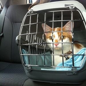 Viajar coche gato