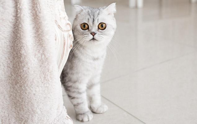 cachorro gato observando asustado
