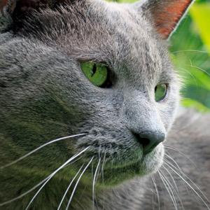 Como evitar el sobrepeso en los gatos