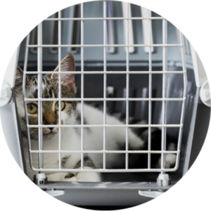 entrega gato adopción