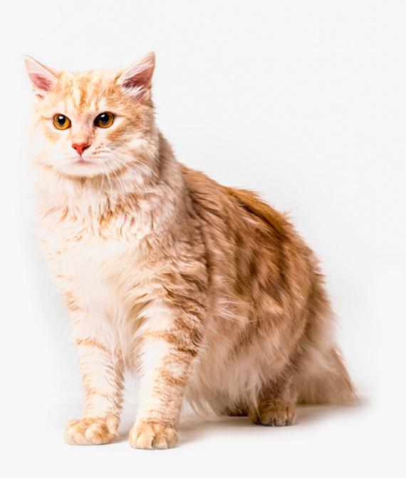 Todo para tu gato camas rascadores juguetes para tus mascotas