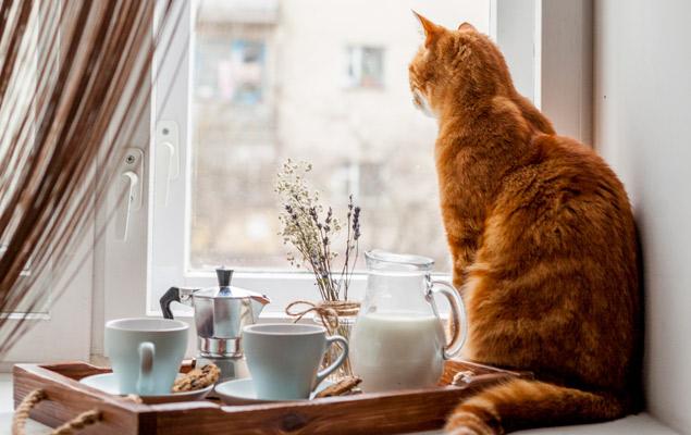 gato feliz mirando ventana