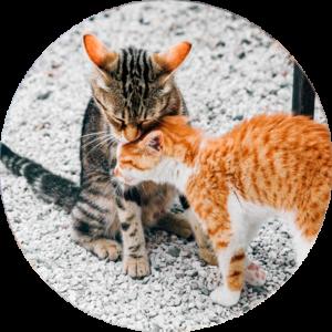 visita-adopción-gato
