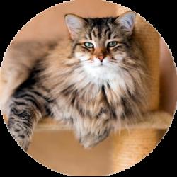 Gato sobre rascador
