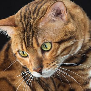 Nombres de gatos películas de cine