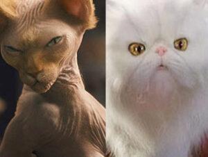 © Warner Bros Mr Tinkles en Como Perros y Gatos La revancha de Kitty Galore Nombres de gatos del mundo del cine