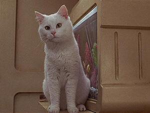 © Gaumont Film Company Sweetie en El Quinto elemento Nombres de gatos del mundo del cine
