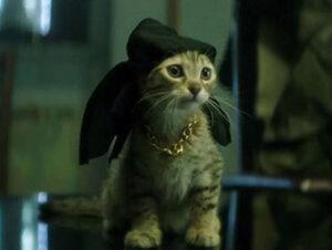 © Warner Bros Keanu en Keanu Nombres de gatos del mundo del cine