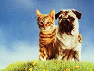 © Columbia Pictures Milo en Las Aventuras de Milo y Otis Nombres de gatos del mundo del cine