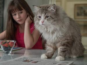 © EuropaCorp Mr Fuzzypants Sr Pelusín Siete vidas este gato es un peligro Nombres de gatos del mundo del cine