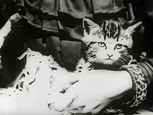 British Film Institute The Sick Kitten Nombres de gatos del mundo del cine