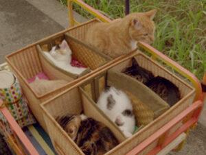 © Suurkiitos Rent-a-Cat Nombres de gatos del mundo del cine