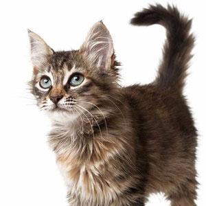 Cachorro gatito adopción