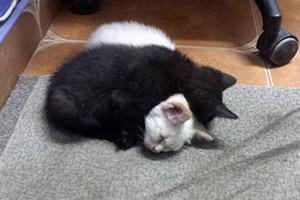 Jackie y Nuca durmiendo