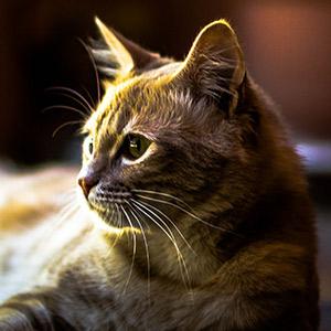 salud gato adopción llegada a casa destacada
