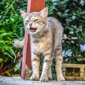 el lenguaje de los gatos agresivo