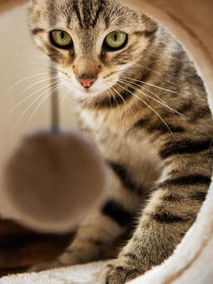 gatito rascador juego gato