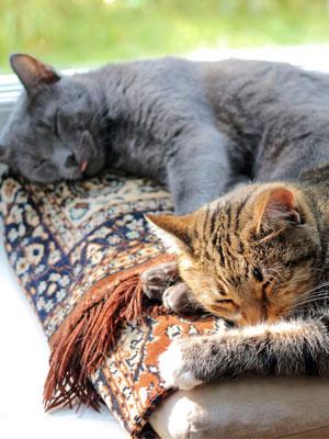 gatos durmiendo ventana casa