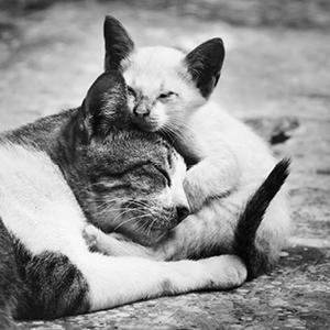 adoptar gatos pequños