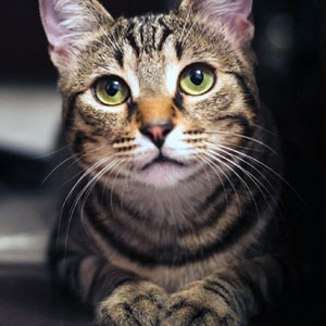 como cuidar de tu gato después de las vacaciones de verano