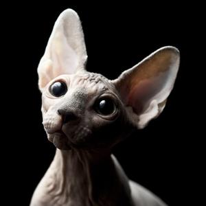 gato egipcio sphynx esfinge piel blanca con manchas negras