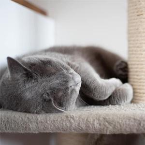 Azul ruso rascadores para gatos