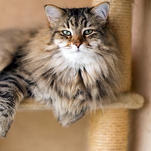 los mejores rascadores para gatos destacada
