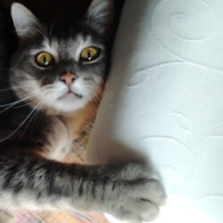 repelente gato arañando silla