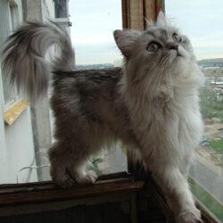 repelente gato