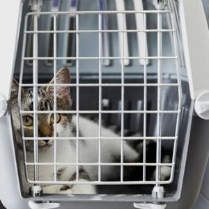 viajar gato avión transportín