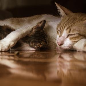Necesidades energéticas en las etapas de la vida de un gato