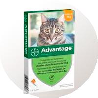 Antiparasitarios para gatos pipetas