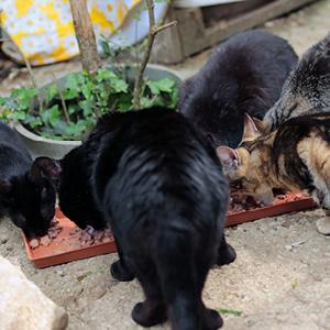 gatos callejeros comiendo comida para gatos