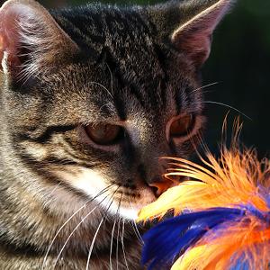 juguetes para gatos cañas de pescar con plumas