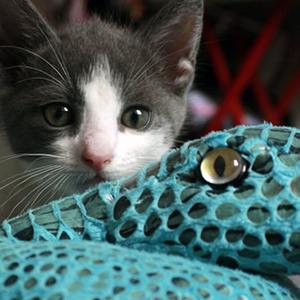 juguetes para gatos peluches