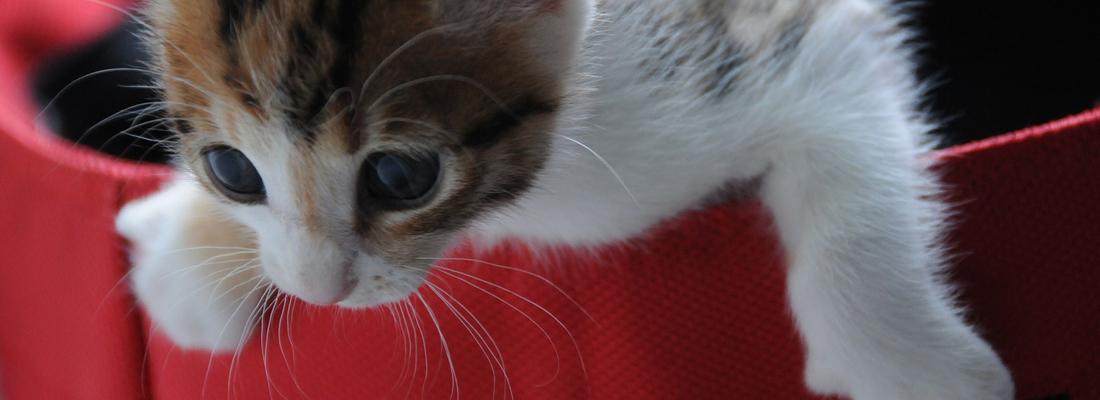 juguetes para gatos interactivos saco rojo