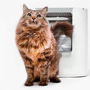 areneros para gatos grandes como el Maine Coon