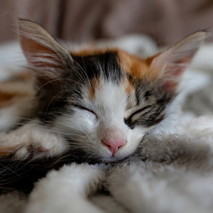 camas para gatos con mantitas