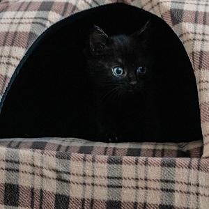 camas para gatos iglus