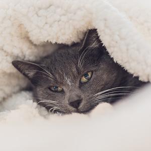 camas para gatos manta gruesa