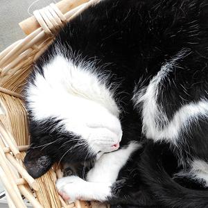 camas para gatos redondas