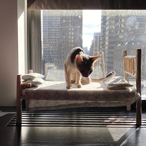 camas para gatos con forma de cama